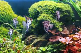 Mon premier aquarium